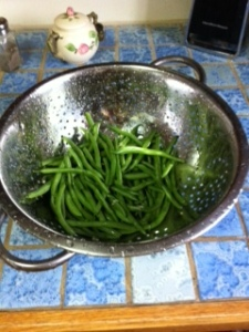 first crop of greenbeans