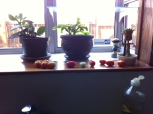 tomato haul