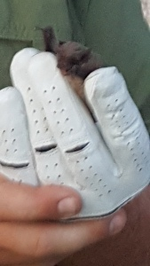 bat in hand 2