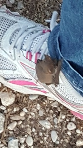 bat on shoe 2