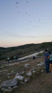 flying bats2